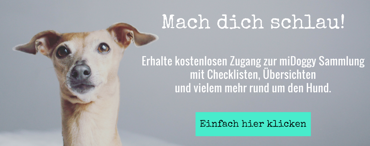 Hunde Blog Community miDoggy für Hundebegeisterte