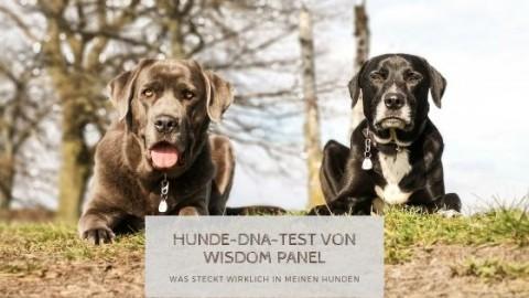 DNA-Test von Wisdom Panel & Was steckt wirklich in meinen Hunden?