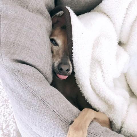 Because shit happens…warum eine Hundehaftpflicht so wichtig ist [Anzeige]