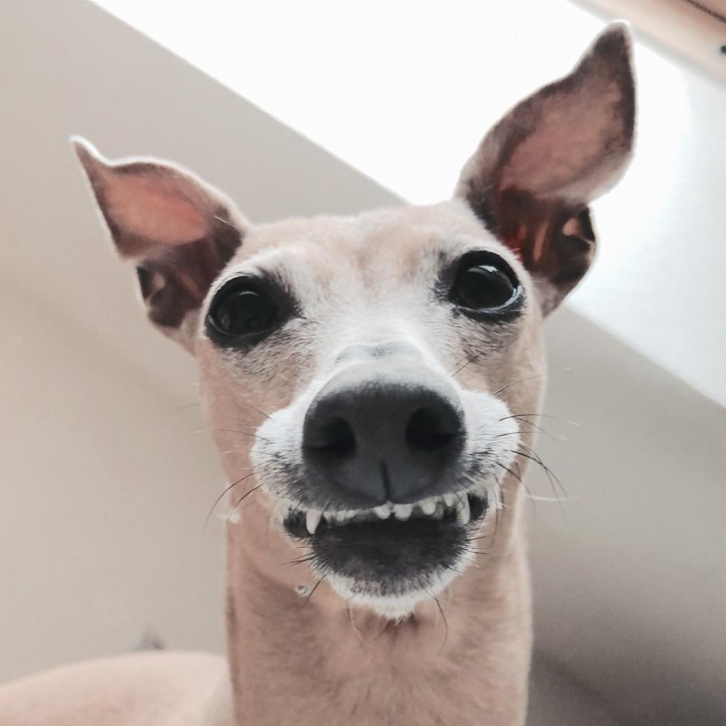 Hunde lachen