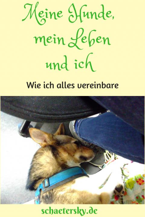 Meine Hunde, mein Leben und ich