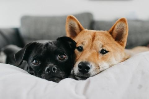 #stayhome – Hunde zuhause beschäftigen