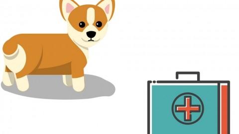 Unsere Hunde-Hausapotheke für den Notfall