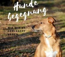 Unserer Schritte zu entspannten Hundebegegnungen