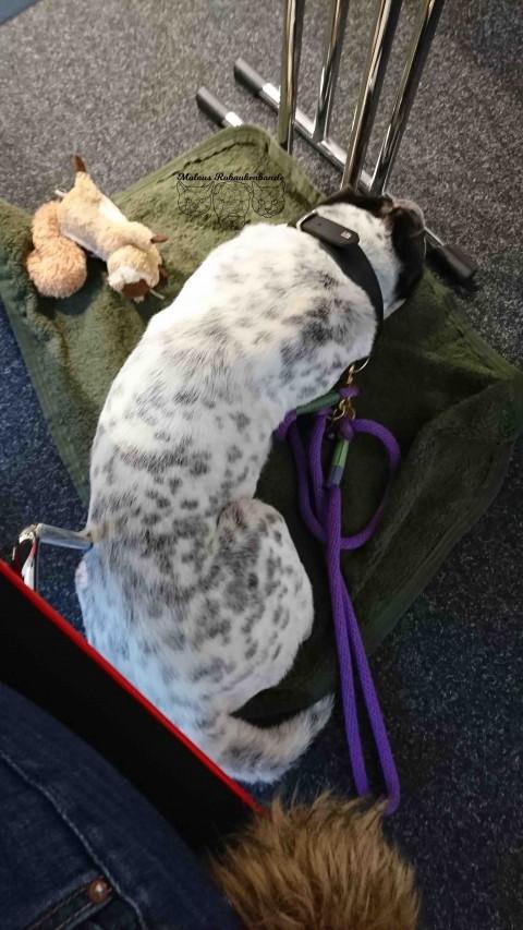 Bürohund – nötige Grundlagen deiner Arbeitsstelle