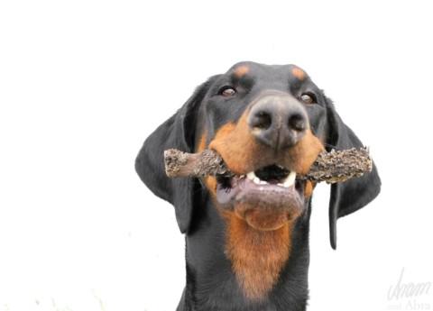 [ BLOGPARADE ] Mein Hund hat ein Superfrauchen, weil…