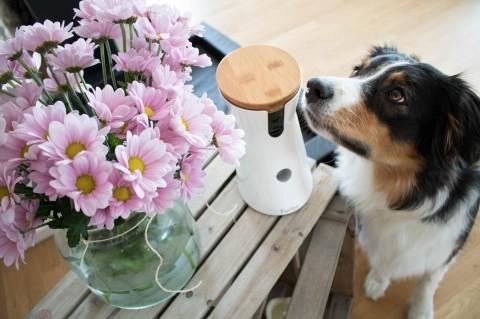 Doggie allein daheim – Training mit der Furbo Hundekamera (enthält Werbung)