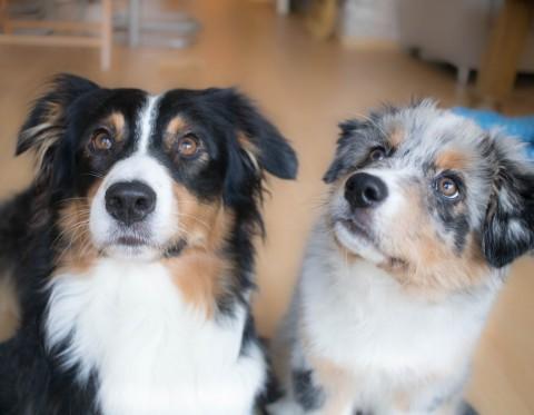 Unsere erste Woche mit zwei Hunden
