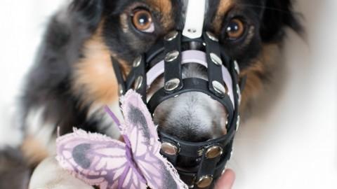 Hunde die einen Maulkorb tragen sind böse! Oder? / enthält Werbung