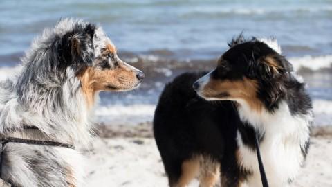 Mit einem reizempfindlichen Hund am Hundestrand