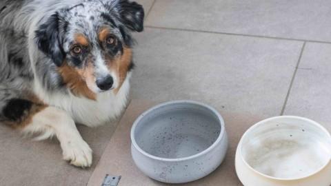 Gesundheitsschädliche Stoffe in Hundenäpfen, die ihr unbedingt meiden solltet