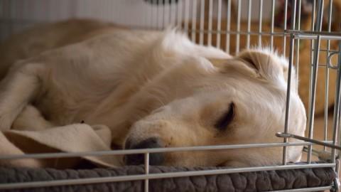 Hundebox-Training – nochmal von vorne