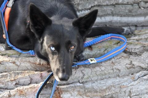 """Hundefreund – Ideale Hundeleinen für """"Gerne-an-der-Leine-Zieher"""" [Anzeige]"""