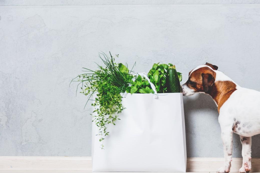 Hundefutter Vergleich konventionell vegan insekt bio