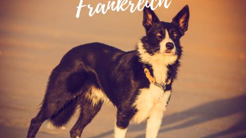 Hundehaltung in Frankreich – das müsst Ihr wissen