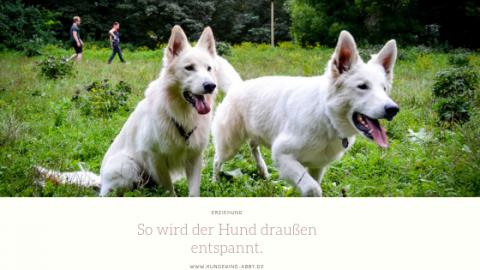EINFACH UMSETZBARE TIPPS FÜR DEN ENTSPANNTEN HUND. ||WERBUNG