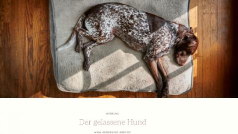 SO WIRD EUER HUND EIN GELASSENER HUND. || WERBUNG
