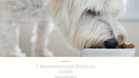 5 ALTERNATIVEN ZUM BARFEN IM URLAUB