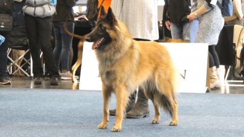 Hundemesse Hund und Pferd in Dortmund – unser Bericht