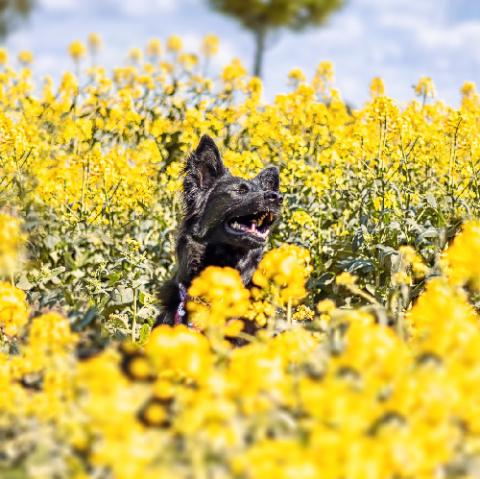 Selbsternannte Hundeprofis und ihre Weisheiten (Blogparade)