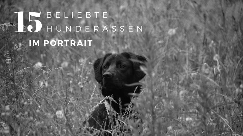 Hunderassen im Portrait