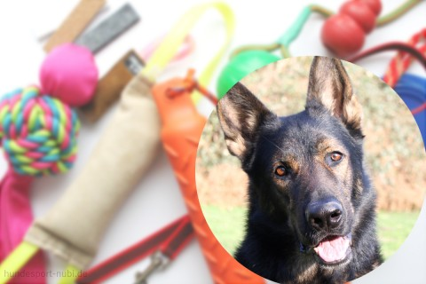 Nubi im Interview: Qualitätssicherung bei Hundesport Nubi