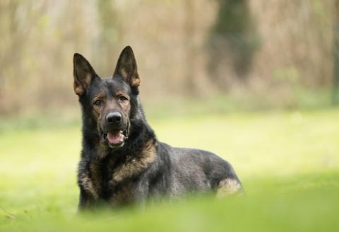 Begleithundeprüfung: die Basics für den Hundesport [inkl. Checkliste]