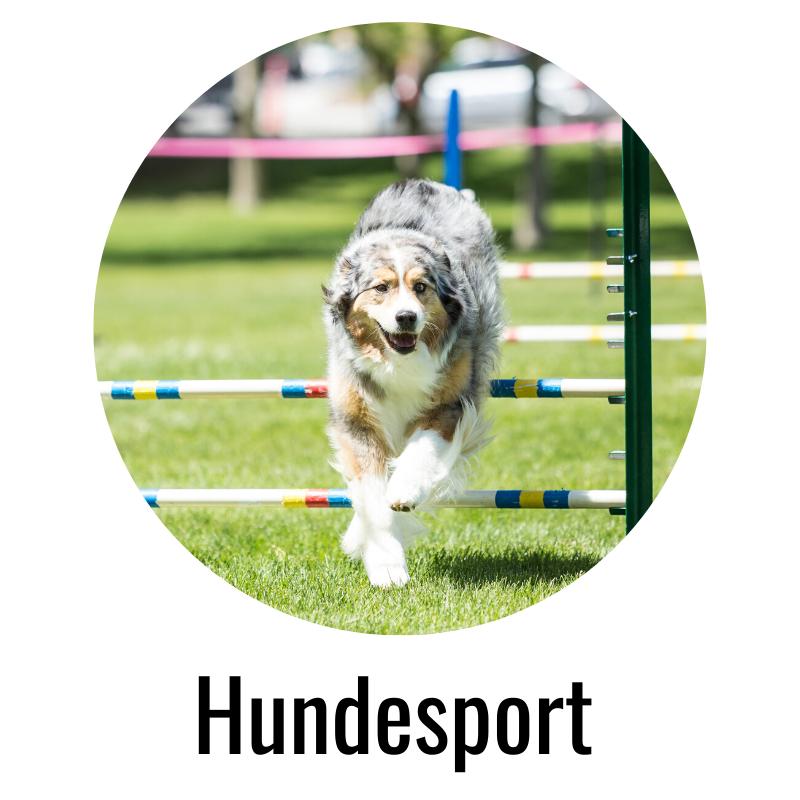 Hundesport miDoggy