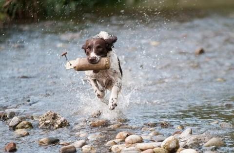 30 Hundesportarten auf einen Blick + so findet ihr das Passende für euren Hund