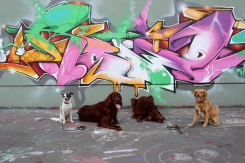 Kennt ihr schon die Hundestadt des Jahres 2015?