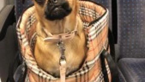 Warum wir eine Hundetasche haben