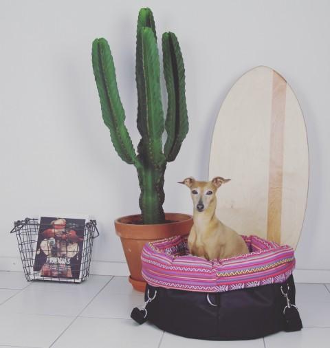 4 Tipps für einen entspannten Restaurantbesuch mit Hund [Anzeige]