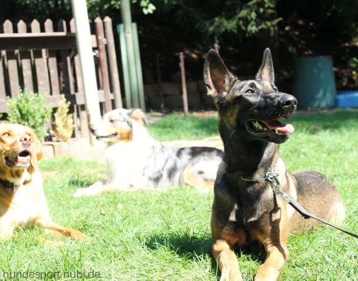 Hundetraining - Tipps für dein Training mit dem Hund - Hundesport Nubi (1)