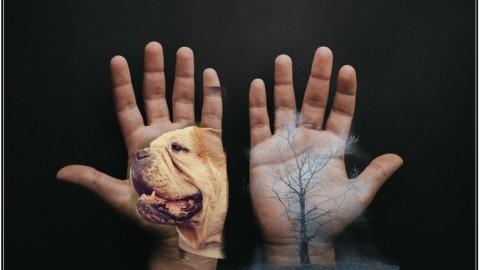 Der Hund – ein handgemachtes Produkt des Menschen