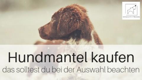 Du willst einen Hundemantel kaufen? – das solltest du beachten