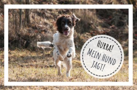 Hurra, mein Hund jagt!
