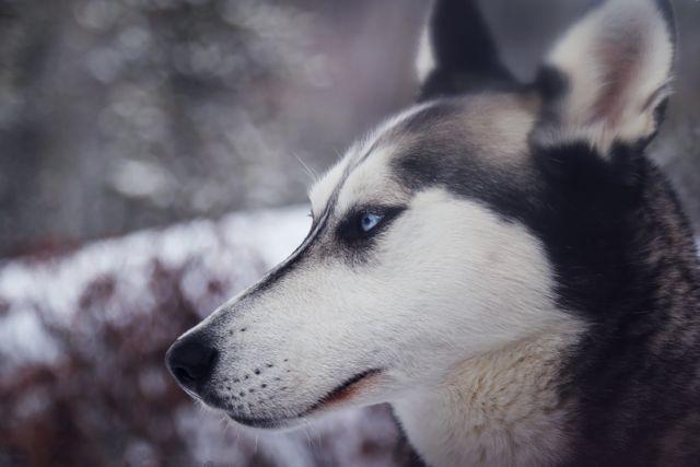 Tipps um den Hund gesund durch den Winter zu bringen