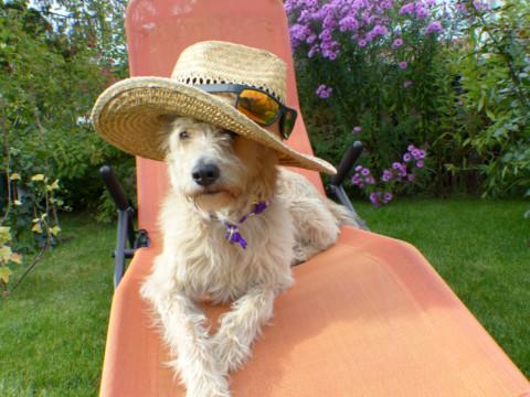 miDoggy Parade: Vollzeitjob und Hund