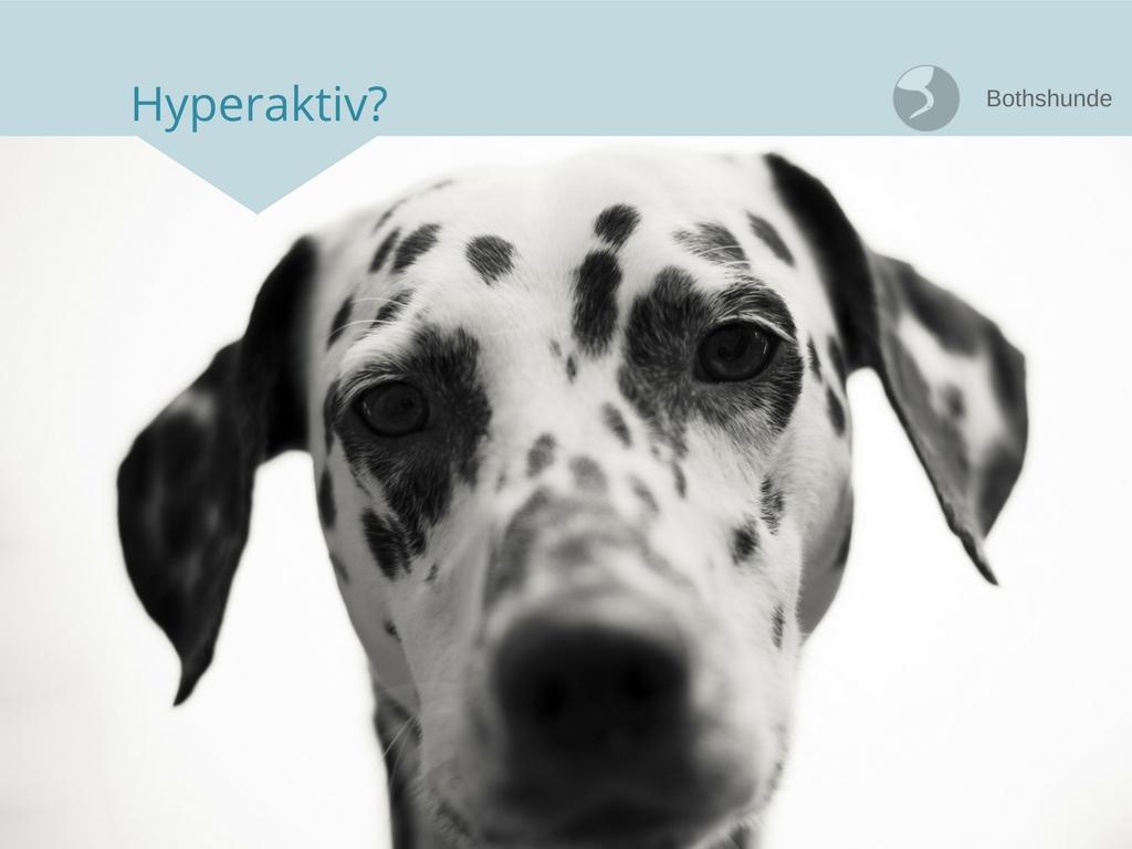 Hyperaktiver Hund