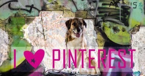 Pinterest für Hundeblogger