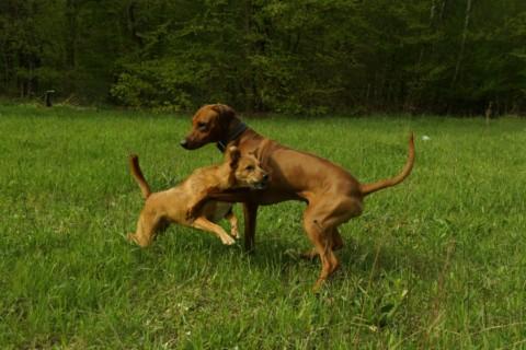 Ponyhof für die Seele – Stressdefinition beim Hund