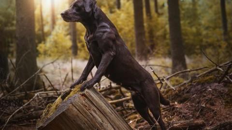 Welcher Enrichment Typ ist dein Hund & Warum diese Frage so wichtig ist