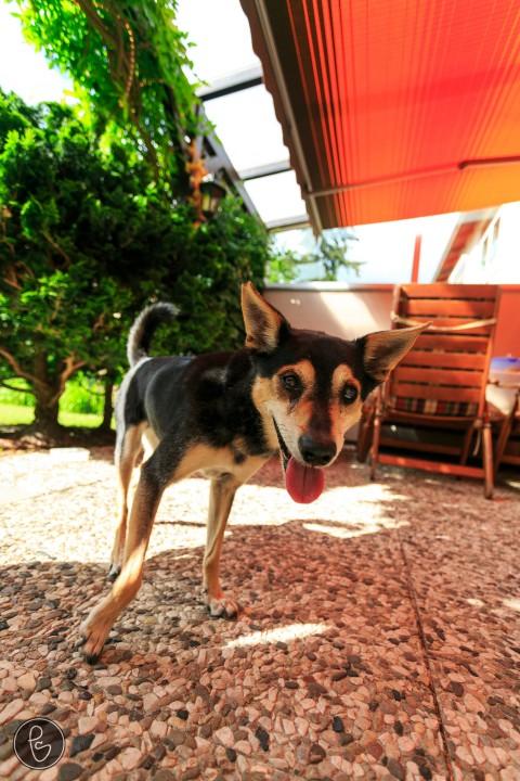 Dogsitting – wie wir da so reingerutscht sind :)