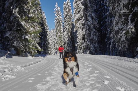Winterwandern mit Hund: Wintermärchen auf dem Weg zur Wildalm