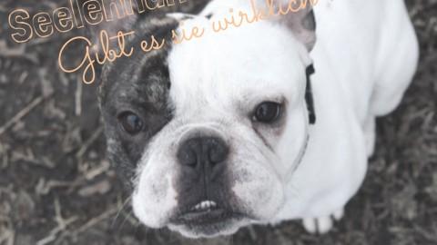 [Blogparade] Seelen- und Herzenshunde – gibt es sie wirklich?