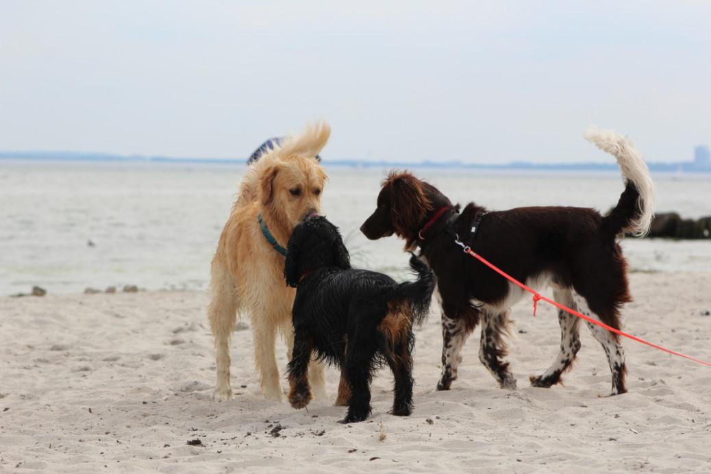 Bedeutung einer Community Hunde
