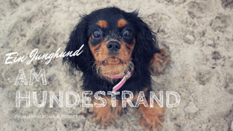 """Ein Jundhund am Hundestrand – """"Brodtener Ufer"""""""