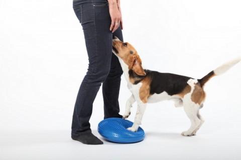 Ethik und Gesundheit im Hunde(fitness)training