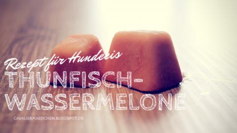 [Rezept] Hundeeis mit Wassermelone und Thunfisch
