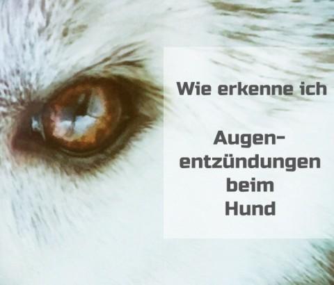 Wie erkenne ich Augenentzündungen beim Hund?